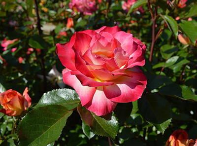 Keith Richards - Rose - Basking In The Sunshine by Glenn McCarthy