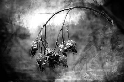 Photograph - Rose Hips by Allyson Schwartz