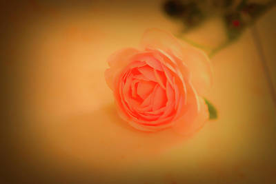 Fruits And Vegetables Still Life - Rose on marble 2 #l2 by Leif Sohlman
