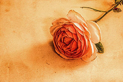 Classic Golf - Rose on marble #l2 by Leif Sohlman