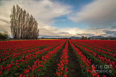 Leonardo Da Vinci - Rows of Red by Mike Reid