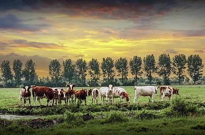 Kitchen Mark Rogan - Rows of Trees and Cattle in the Netherlands by Randall Nyhof