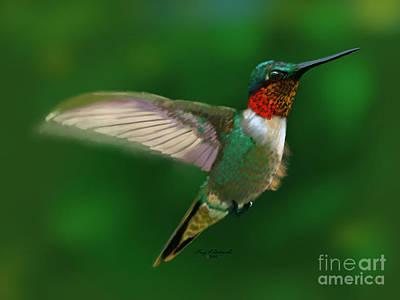 Animals Digital Art - Ruby Throated Hummingbird by Gary F Richards