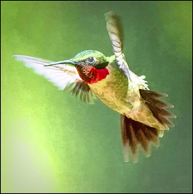 Chemical Glassware - Ruby-throated Hummingbird, Male by A Macarthur Gurmankin