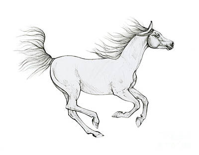 Animals Drawings - Running arabian horse 2020 10 01 by Angel Ciesniarska