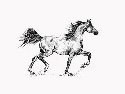 Animals Drawings - Running Arabian Horse Drawing 1 by Angel Ciesniarska