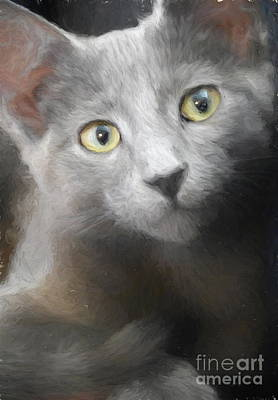 Wine Corks Royalty Free Images - Russian Blue Kitten Portrait 3 Royalty-Free Image by Andrea Anderegg