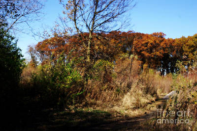 Frank J Casella Royalty-Free and Rights-Managed Images - Rustic Autumn - Painterly by Frank J Casella