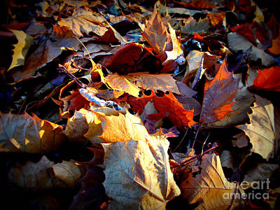Frank J Casella Royalty-Free and Rights-Managed Images - Rustling Autumn Golden Hour Leaves by Frank J Casella