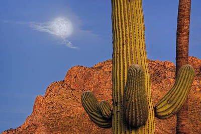 Mark Myhaver Rights Managed Images - Saguaro Mountain Moon h1909 Royalty-Free Image by Mark Myhaver