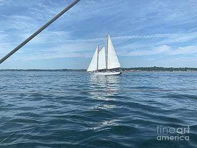 Safari - Sailboat in blue water. by Jaimie Tuchman