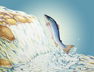 Painting - Salmon Leaping by Craig Austin