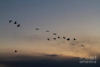 Staff Picks Cortney Herron - Sandhill  Silhouette at Sunset by Ruth Jolly