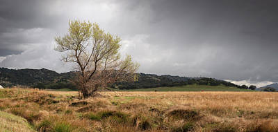 Photograph - Santa Ysabel Tree and Clouds by William Dunigan