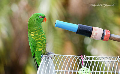 Animals Digital Art - Scaly breasted lorikeet 112 by Kevin Chippindall