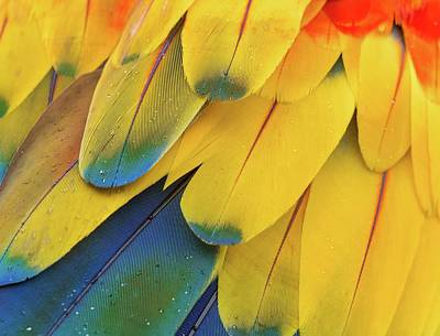 Royalty-Free and Rights-Managed Images - scarlet macaw feathers - yellow blue and red birds of paradise flower - Costa Rica by Julien