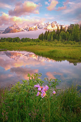 Design Turnpike Books Royalty Free Images - Schwabacher Wildflowers Royalty-Free Image by Johnny Adolphson