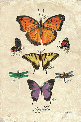 Royalty-Free and Rights-Managed Images - Scientific Butterflies 1 by Debbie DeWitt
