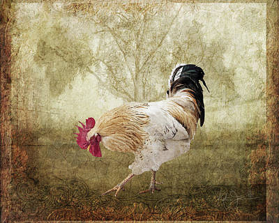 Animals Royalty-Free and Rights-Managed Images - Scratching Rooster by Katrina Jones