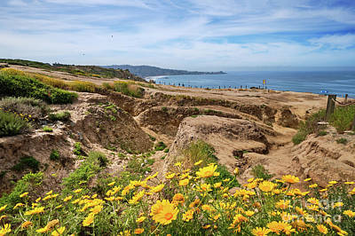 Little Mosters - Sea Dahlias on the cliffs at Torrey Pines by Jo Ann Snover