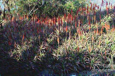 Clouds Rights Managed Images - Sea of Aloe Arborescens Royalty-Free Image by Katherine Erickson