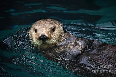 Fathers Day 1 - Sea Otter Swim by Nick Gustafson