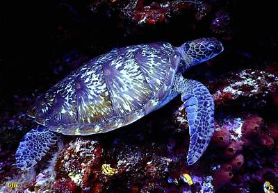 Rights Managed Images - Sea Turtle L B Royalty-Free Image by Gert J Rheeders