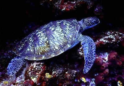 The Bunsen Burner - Sea Turtle L B by Gert J Rheeders