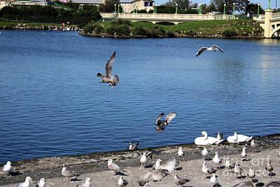 Venice Beach Bungalow - Seabirds in Flight by Doc Braham