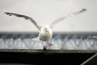 Photograph - Seagull by Eileen Clark