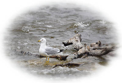 Railroad - Seagull on the Rock by Maria Keady