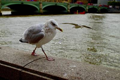 Winter Animals - Seagull, South Bank, London. by Joe Vella