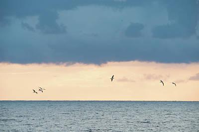 Photograph - Seagulls Flying by Flavio Massari