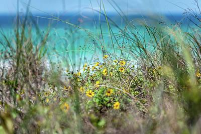 Photograph - Seaside Sunflowers by Kurt Lischka