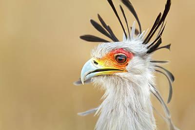 Outdoor Graphic Tees - Secretary bird portrait by Mari Swanepoel
