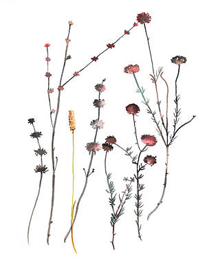 Landscape Photos Chad Dutson - Seed heads and Flowers by Luisa Millicent
