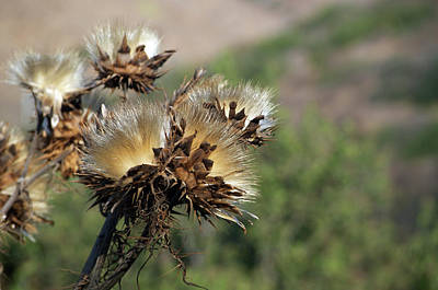 Photograph - Seed Heads by Scott Norton