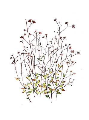 Target Threshold Watercolor - Seeds and dried Flowers by Luisa Millicent