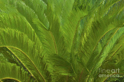 Painting - Sago Palm - Tropical Palm by Dale Powell