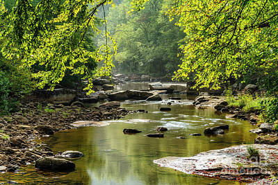 Moody Trees - September Sunshine on the River by Thomas R Fletcher