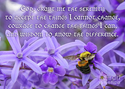 Photograph - Serenity Prayer with Bumblebee by Olga Hamilton