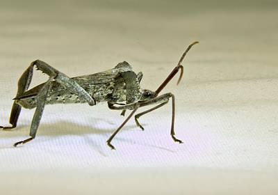Animal Portraits - Serious Assassin Bug by Douglas Barnett