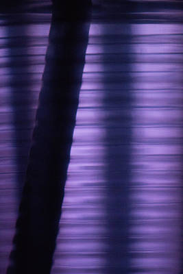 Photograph - Shades of Purple by William Selander