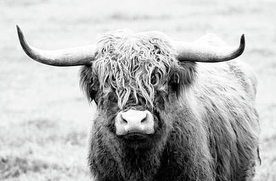 Crazy Cartoon Creatures - Shaggy Highland Bull by Athena Mckinzie