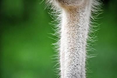 Amy Weiss - She Had a Neck Like An Ostrich by Rebecca Herranen