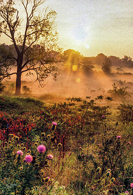Staff Picks Judy Bernier Rights Managed Images - Shelby Farms Sunrise Royalty-Free Image by James Richardson