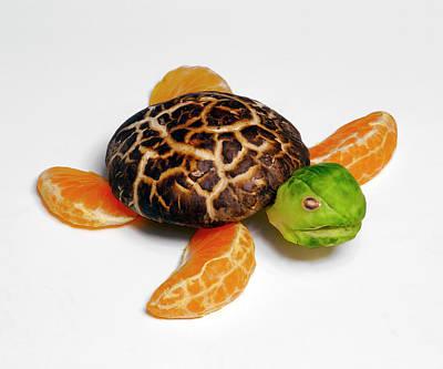 Photograph - Shitake Turtle by Cacio Murilo De Vasconcelos