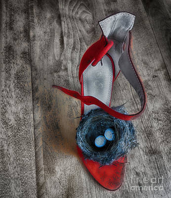 Photograph - The Red Nesting  by Steven Digman