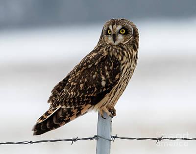Curated Bath Towels - Short-eared Owl Portrait by Mike Dawson