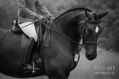 Photograph - Show Hunter by Michelle Wrighton